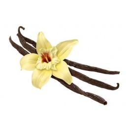 Ochucovací pasta Joypaste Caribe vanilka 100 g